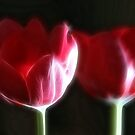 Neon Tulip Duo II by Lesley Smitheringale