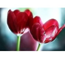 Neon Tulip Duo Photographic Print