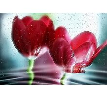 Tulip Reflections Photographic Print