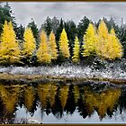 Tamarack Dreams by Wayne King