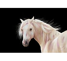 Pretty Palomino Photographic Print