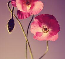 Bright pink poppies  by JBlaminsky