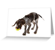 Playing German wire-haired pointer puppy Greeting Card
