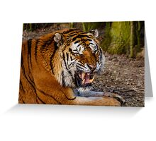 Siberian Tiger roar Greeting Card