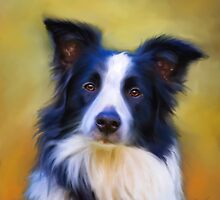 Taj - Border Collie by Michelle Wrighton