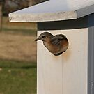 Leaving the Nest by shutterbug3070