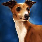 Magnifico - Italian Greyhound by Michelle Wrighton