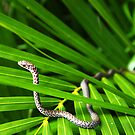"""Snake on a Palm"" by David Lee Thompson"