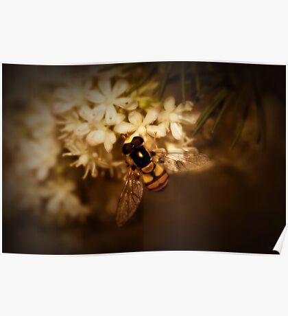 Hoverfly on Blossom Poster