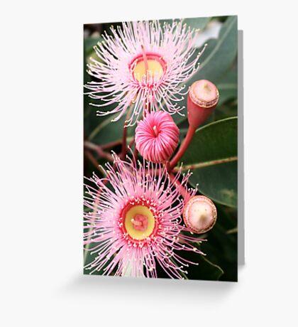 flowering eucalypt Greeting Card