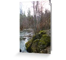 Bear Creek I Greeting Card