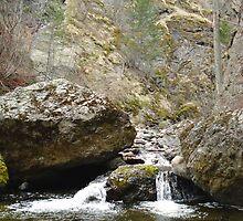 Bear Creek II  by Gregory Ewanowich