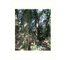 Artic Beech Trees 2000 yrs old Art Print