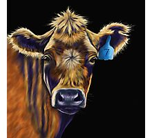 Lucky Number Seven Cow Painting Photographic Print