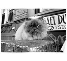 Cat With Attitude Poster