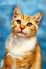 William Orange Tabby Cat  by Michelle Wrighton