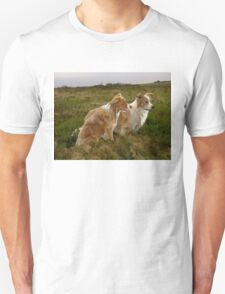 Border Collies in the field T-Shirt