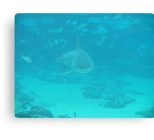 Shark bay Sea world Gold coast Canvas Print