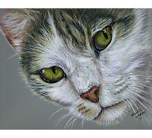 Tara - White and Tabby Cat Painting Photographic Print