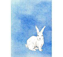 Rabbit Blue Photographic Print