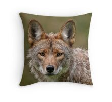 Coyote Portrait  Throw Pillow