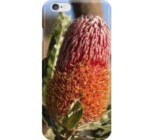 Banksia menziesii iPhone Case/Skin
