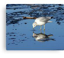 River Gull Canvas Print
