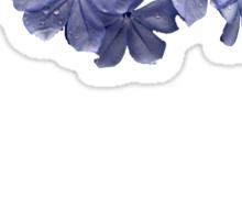 Pretty Plumbago with Raindrops Sticker