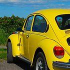 Bright Bug by Shane Shaw
