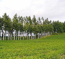 Biei Trees by satsumagirl