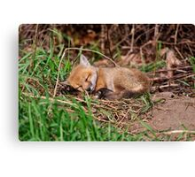 Fox Kit 9 Canvas Print
