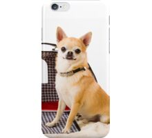 Chihuahua and pet carry case iPhone Case/Skin
