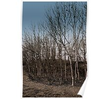March Trees Poster