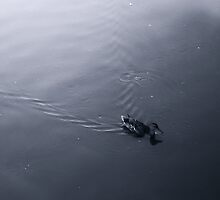 Duck on the water by martinbenito