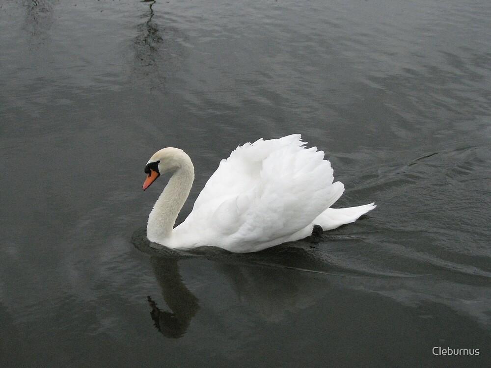 A Royal Swan Indeed by Cleburnus
