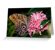 Owl Butterfly Greeting Card