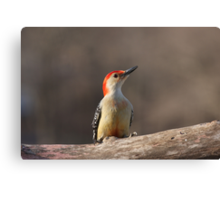 Old Red Belly Canvas Print