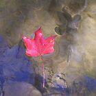 red leaf at cedar creek by peggywright