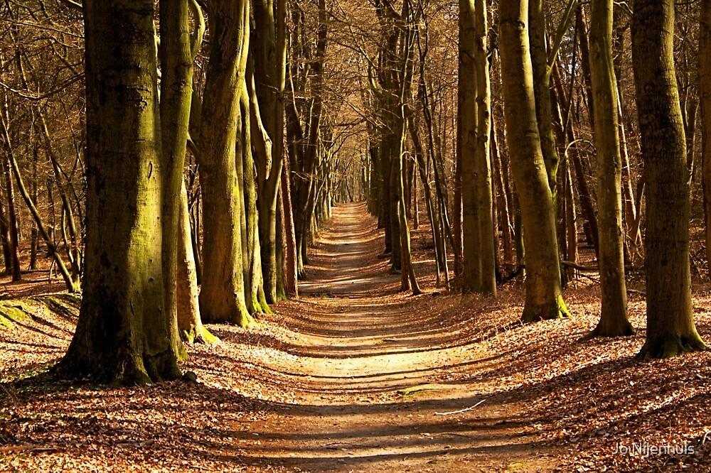 Forest Path in Spring Light by Jo Nijenhuis