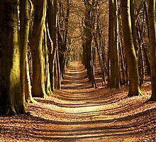 Forest Path in Spring Light by Jo Nijenhuis