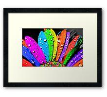 flower petal multicolor Framed Print