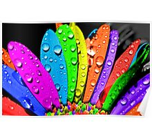 flower petal multicolor Poster