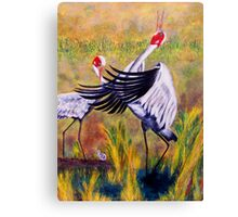 Brolga's Courtship Dance Canvas Print