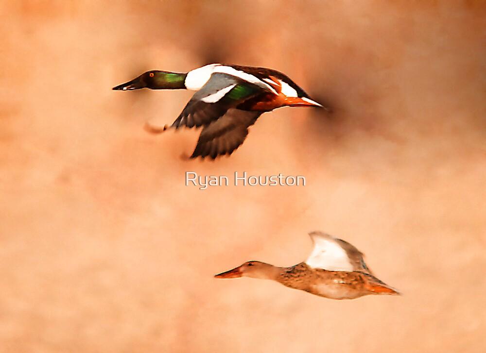 Northern Shoveler - Drake & Hen in Flight by Ryan Houston