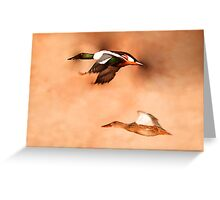 Northern Shoveler - Drake & Hen in Flight Greeting Card