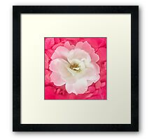 White Rose with Pink Leaves Around Framed Print