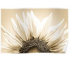 Sunflower close-up, tinted black and white image Poster