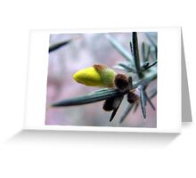 The little bud Greeting Card