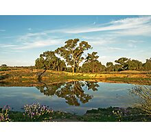Afternoon Reflections Photographic Print
