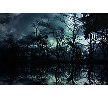 Forbidden Forest Photographic Print
